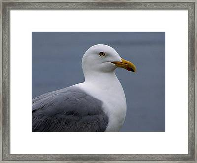 Framed Print featuring the photograph Posing Gull by Gene Cyr