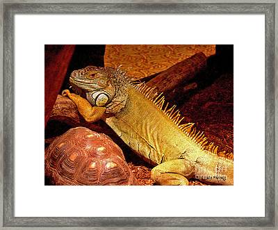 Posing Iguana And Friend Framed Print
