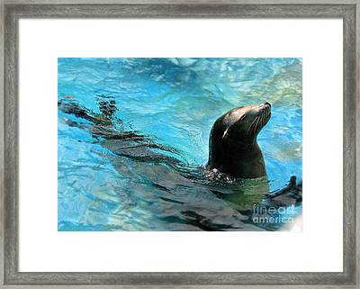 Framed Print featuring the photograph Posing Sea Lion by Kristine Merc