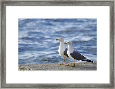 Posing Seagulls Framed Print