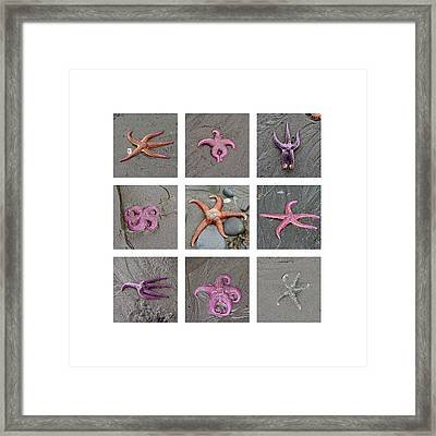 Posing Starfish Framed Print by Art Block Collections