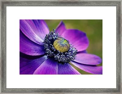 Positively Purple Framed Print by Kjirsten Collier