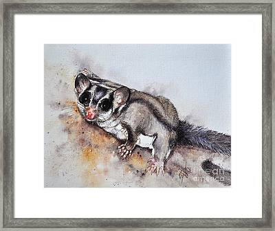 Possum Cute Sugar Glider Framed Print by Sandra Phryce-Jones