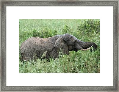 Post Mud Bath Appetite Framed Print