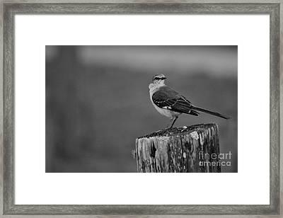 Post Perch Framed Print