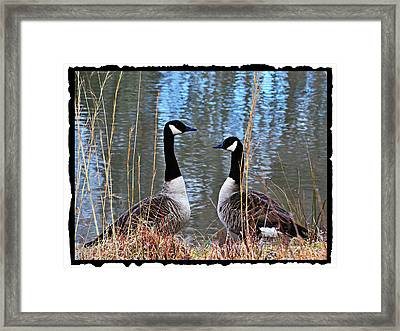 Postcard From Nature Framed Print by Mary Zeman