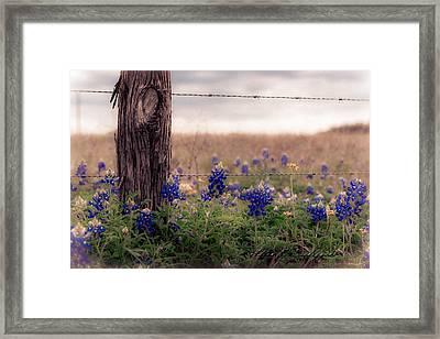 Posted Framed Print