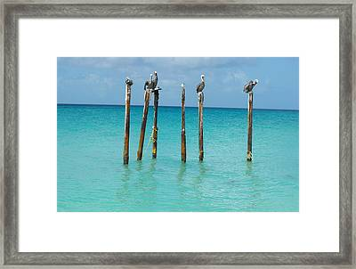 Posted Seagull Framed Print by David and Lynn Keller