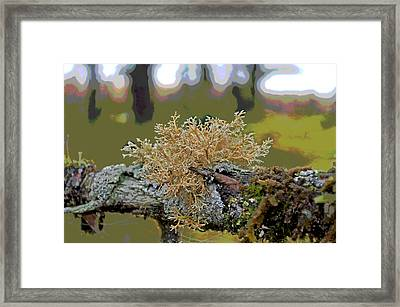 Posterized Antler Lichen Framed Print by Cathy Mahnke