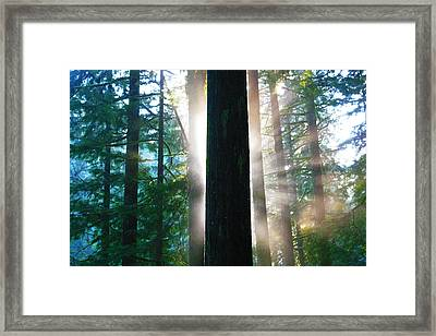 Posterized Forest With Sun Framed Print by Lesley DeHaan