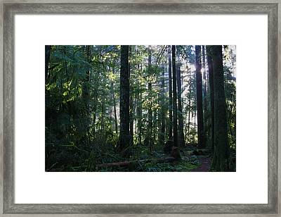 Posterized Rainforest Framed Print by Lesley DeHaan