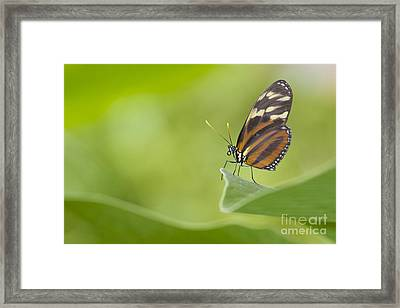 Framed Print featuring the photograph Postman On A Leaf by Bryan Keil