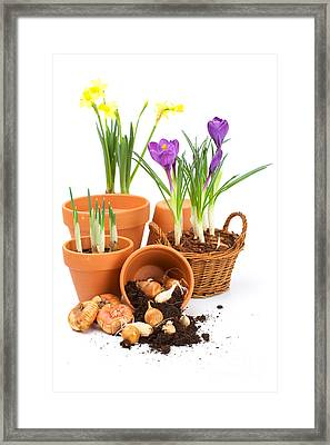 Pot And Flower Framed Print by Boon Mee