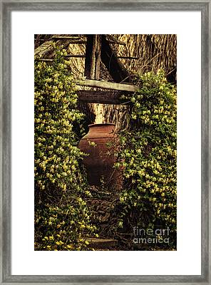 Pot And Vines - Portugal Framed Print by Mary Machare