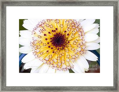 Pot Marigold Citrus Smoothies Framed Print