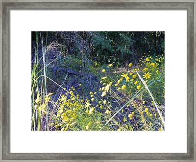 Pot Of Gold Flowerscape Framed Print