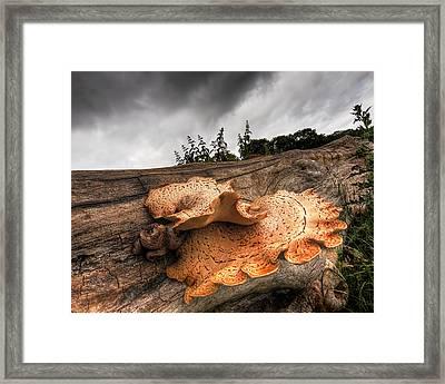 Pot Of Gold - Glowing Fungi Framed Print by Gill Billington