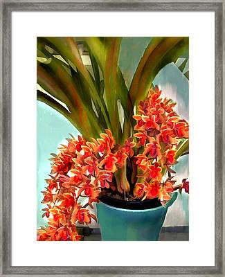 Pot Of Rust Orange Orchids Framed Print