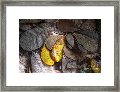 Pot-pourri Framed Print by Michelle Meenawong