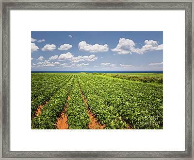 Potato Field In Prince Edward Island Framed Print by Elena Elisseeva