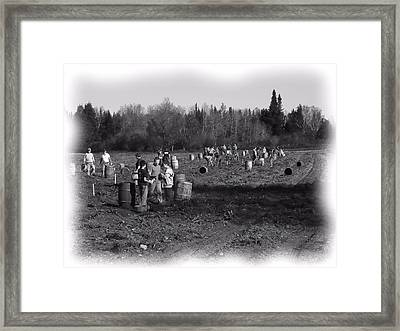 Potato Harvest 2 Framed Print