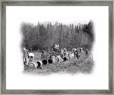 Potato Harvest 21 Framed Print