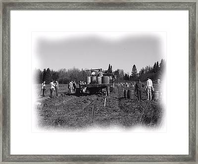 Potato Harvest 3 Framed Print