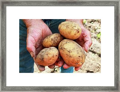 Potatoes Framed Print by Mauro Fermariello