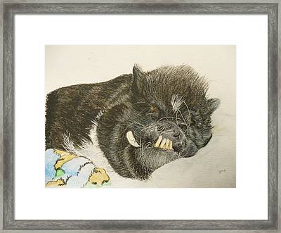Potbellied Pig Memorial Watercolor Portrait U Provide The Picture Or Idea Made To Order 9 X 12 Inch  Framed Print by Shannon Ivins