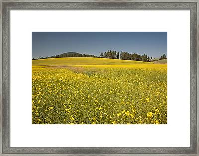 Potlatch Canola Framed Print by Doug Davidson