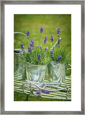 Pots Of Lavender Framed Print by Amanda Elwell
