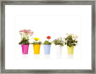 Potted Flowers Framed Print by Alexey Stiop