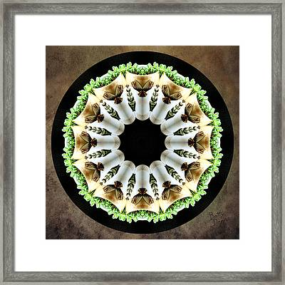 Framed Print featuring the photograph Potted Plant Kaleidoscope by Betty Denise