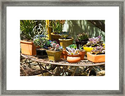 Potted Succulents  Framed Print by Bernard  Barcos