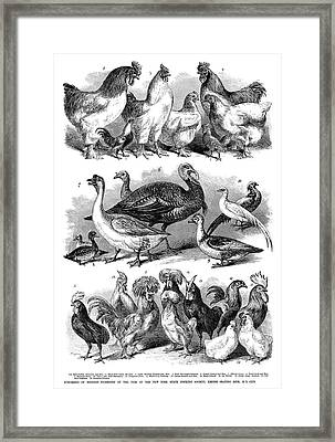 Poultry, 1869 Framed Print by Granger