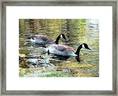 Framed Print featuring the photograph Poultry In Motion by Cristophers Dream Artistry