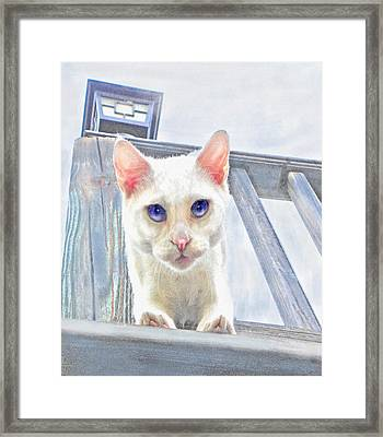Framed Print featuring the digital art Pounce by Jane Schnetlage