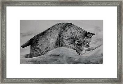 Pounce Framed Print by Jean Cormier