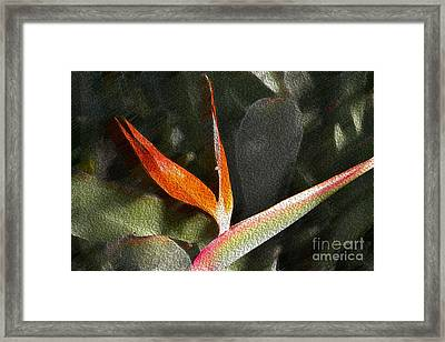 Pouring Out The Oil Framed Print by Beverly Guilliams