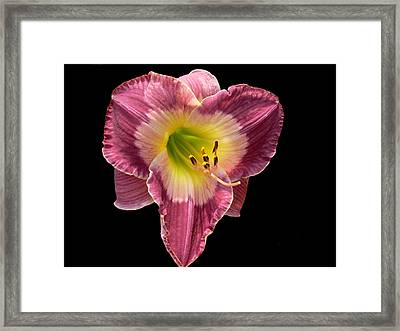 Pouty Framed Print by Doug Norkum