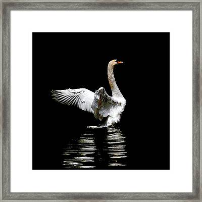 Power And Beauty Framed Print
