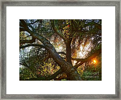 Power Entwined Framed Print by Gem S Visionary
