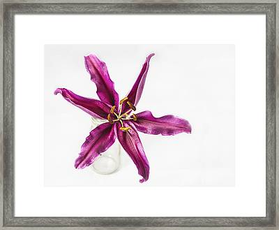 Power Of One Framed Print by Kim Andelkovic