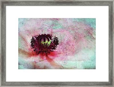 Power Of Poppy Framed Print by Claudia Moeckel