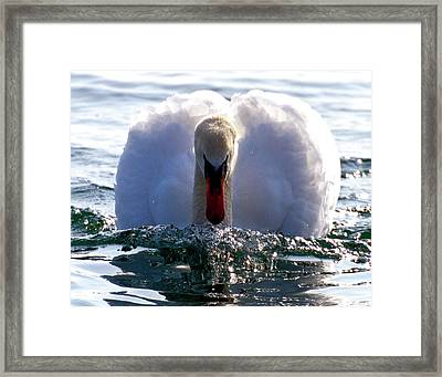 Framed Print featuring the photograph Power Swimming by Charles Lupica