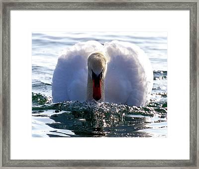 Power Swimming Framed Print