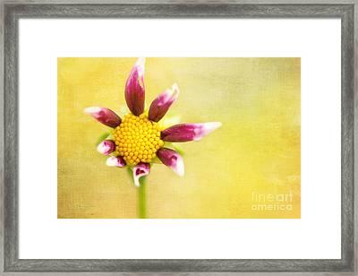 Power To The Flower Framed Print
