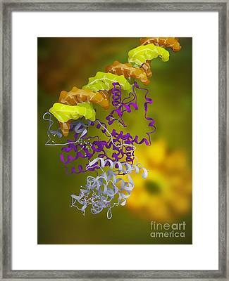 Ppar Regulatory Molecule Framed Print