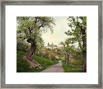 Prague In Bloom I Framed Print