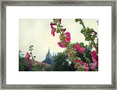 Prague In Bloom V Framed Print